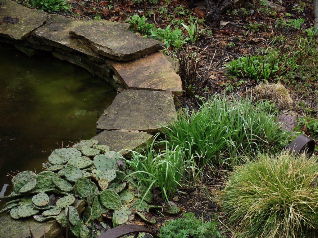 110422 backyard garden 1