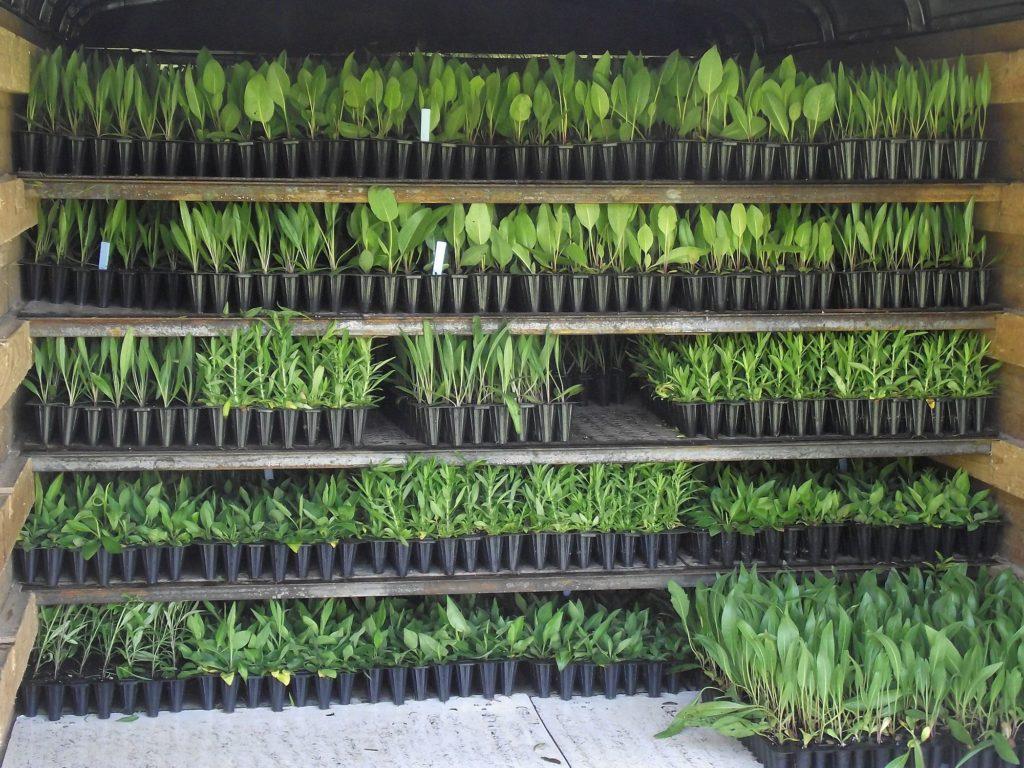 110516 unloading plants 2