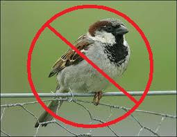 house sparrow with stop sign