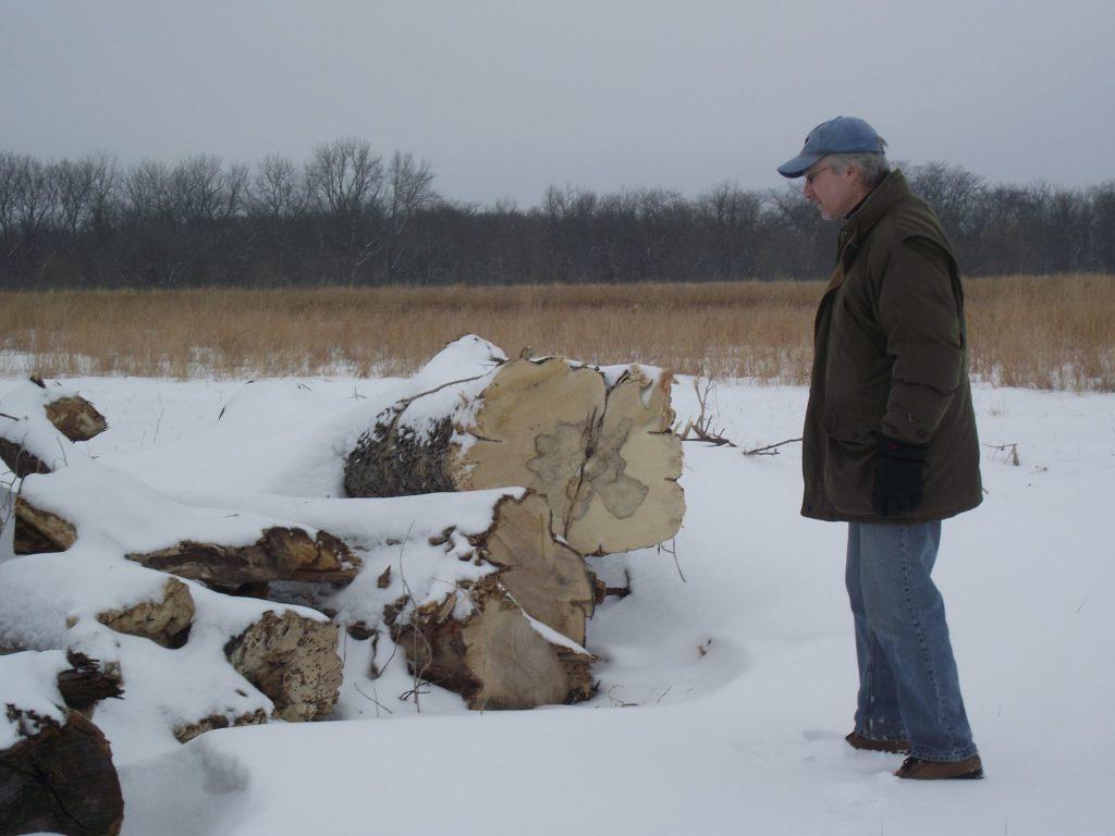 110207 cottonwoods 1
