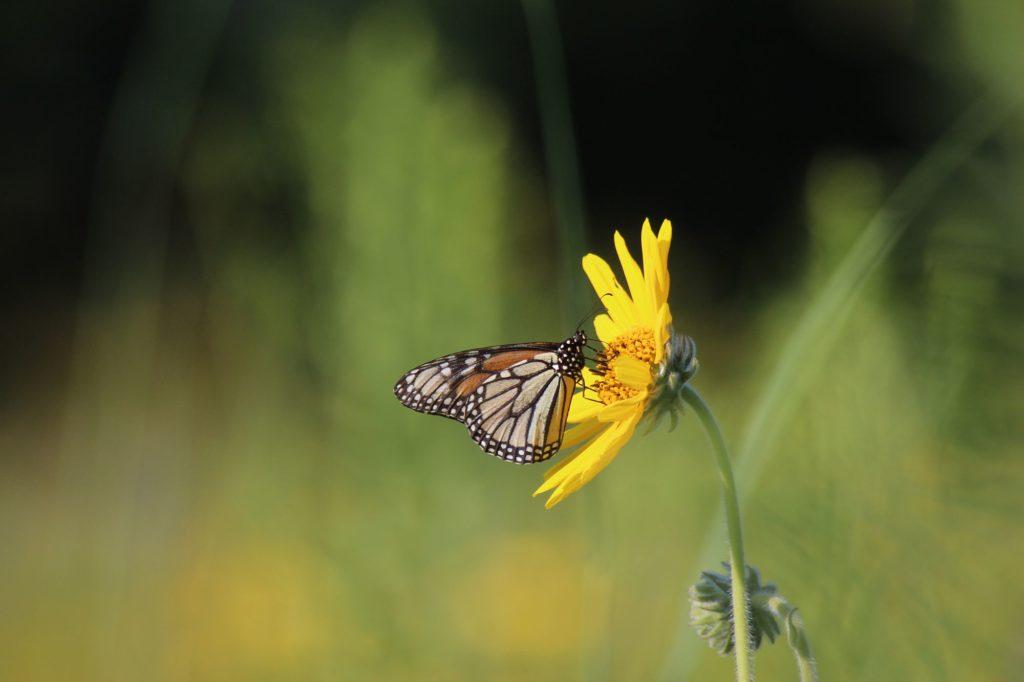 110731 butterfly