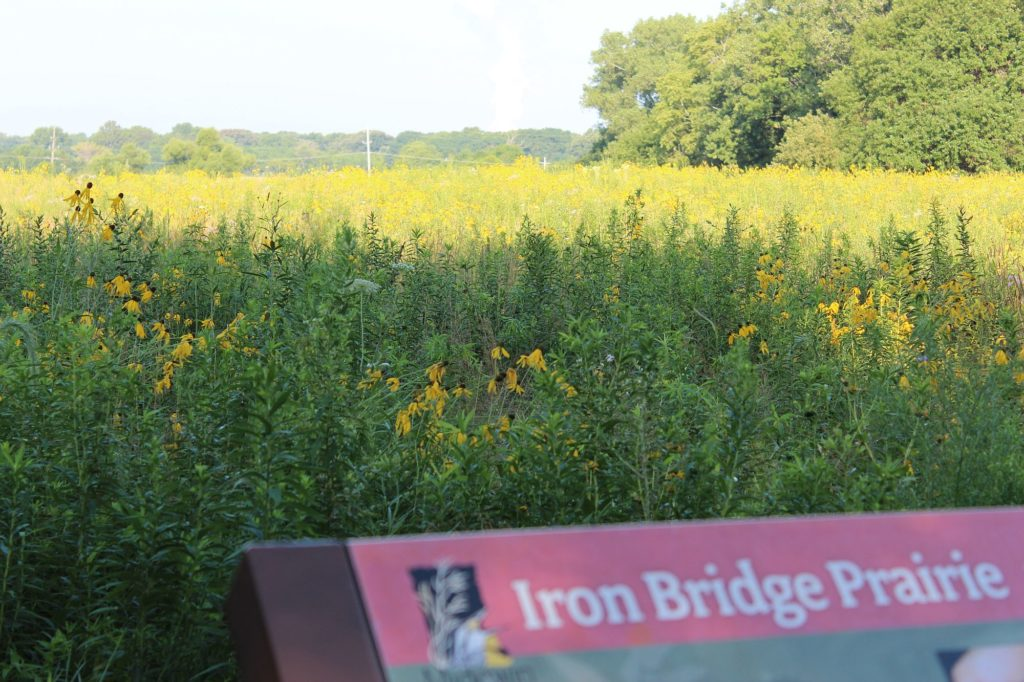110731 iron bridge prairie 2