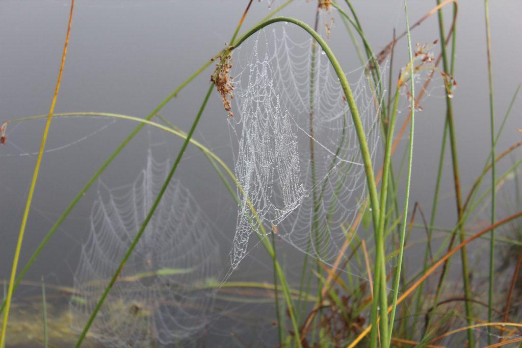 110910 spider webs