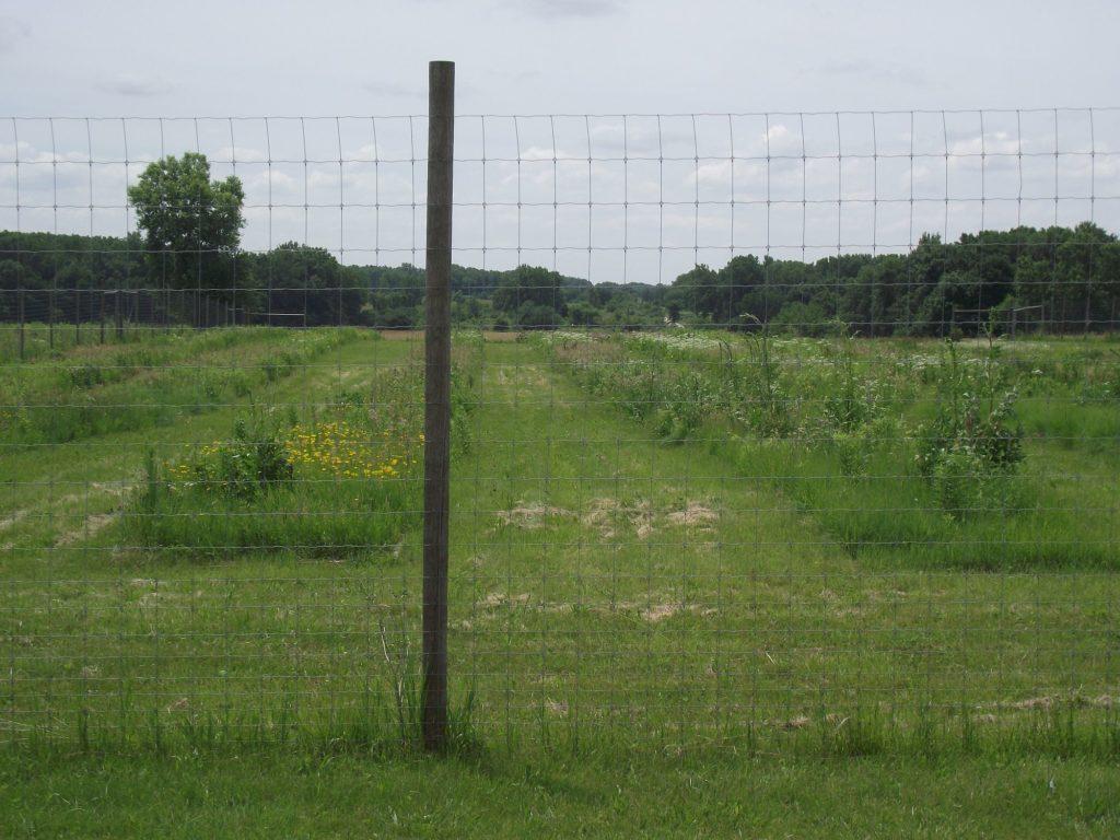 110629 deer fence