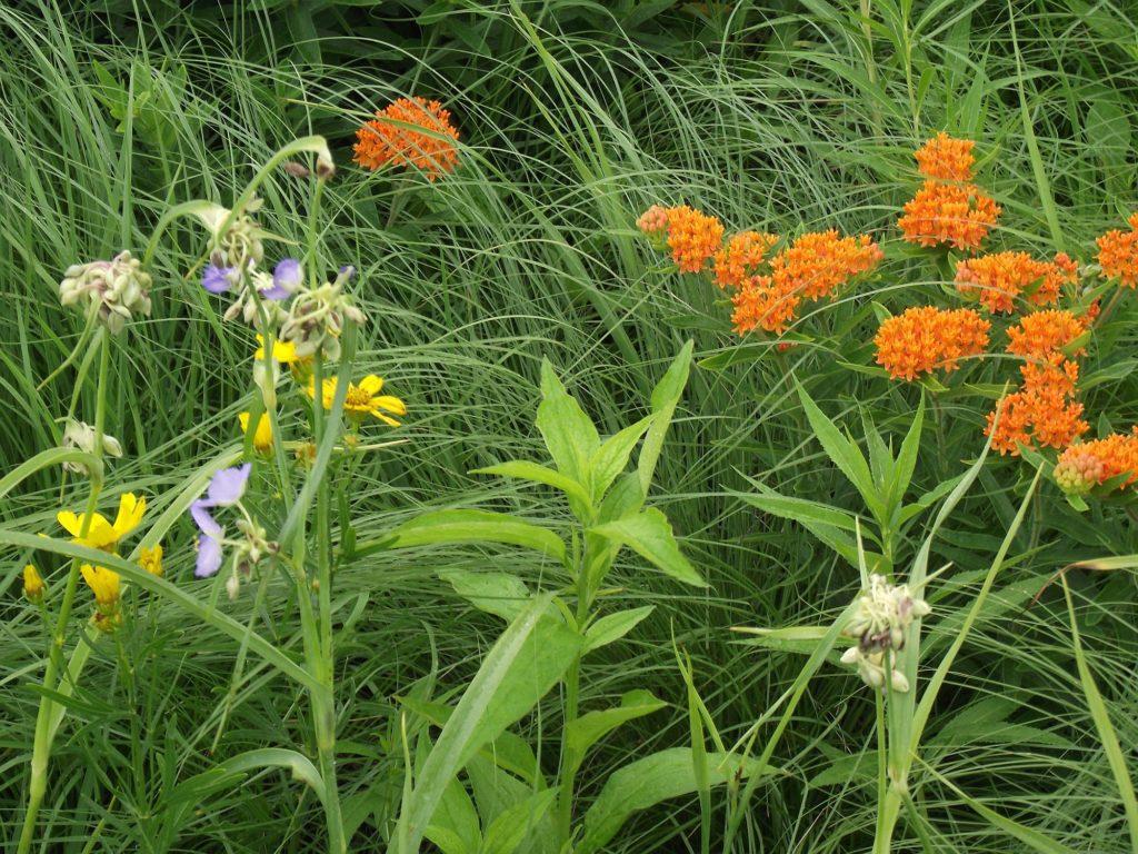 110623 grant creek wildflowers