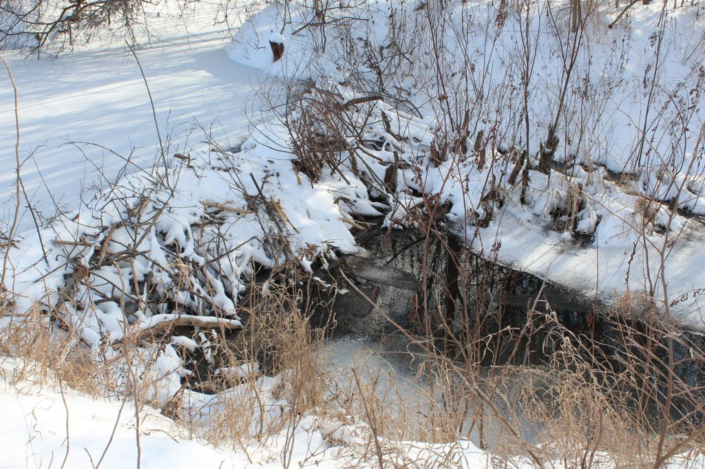 Abandoned beaver dam on a relict drainage ditch